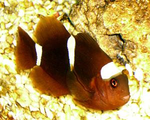 Tropical Fish 11
