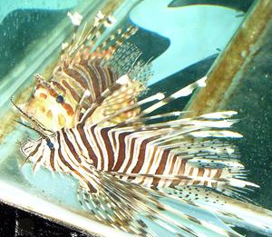 Tropical Fish 16