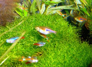 Tropical Fish 23