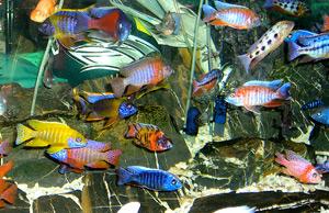 Tropical Fish 26