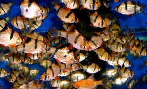 Tropical Fish 27