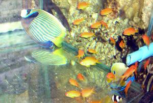 Tropical Fish 50