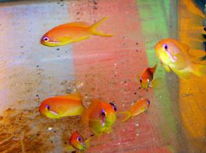 Tropical Fish 51