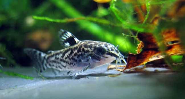 Tropical Fish Supplies