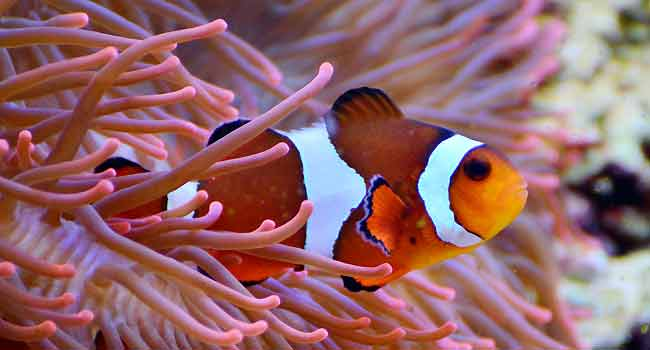 Tropical Reef Fish Info
