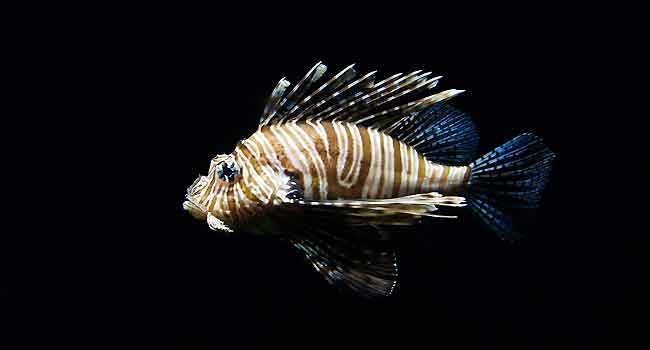 Tropical Saltwater Fish Info