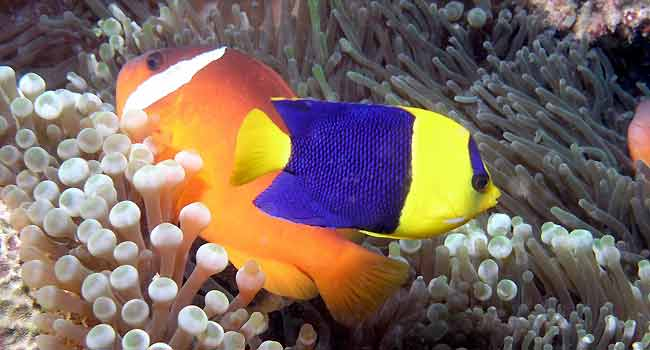 Tropical Fish Online Info