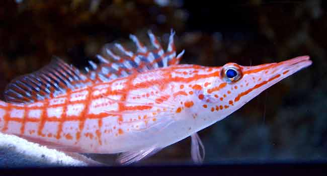 ornamental fish - marvelous pets