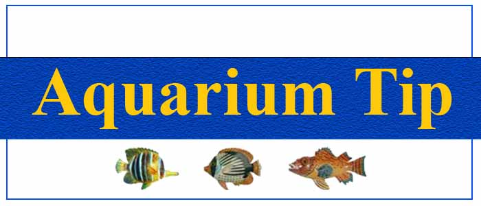 About Aquarium Fish & Accessories