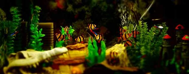 Efficient Care Requirements for Aquarium Fish